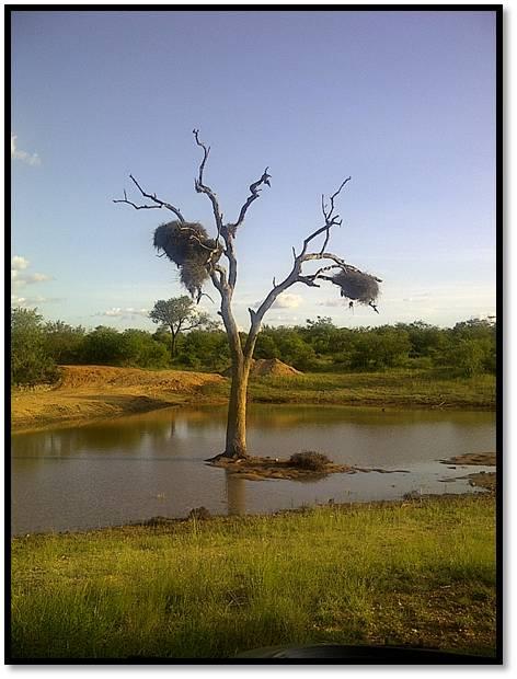 Dead Tree 5