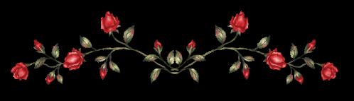 red-rose-divider